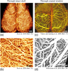 Review of optical coherence tomography based angiography in neuroscience