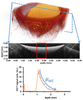 Assesment of apoptosis induced changes in scattering using optical coherence tomography