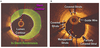 Coronary Stent Healing in Cancer Patients—An Optical Coherence Tomography Perspective