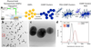 Chain-like gold nanoparticle clusters for multimodal photoacoustic microscopy and optical coherence tomography enhanced molecular imaging