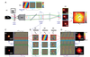 Distortion matrix concept for deep imaging in optical coherence microscopy