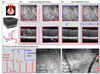Temporal speckle-averaging of optical coherence tomography volumes for in-vivo cellular resolution neuronal and vascular retinal imaging