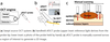 Manually scanned single fiber optical coherence tomography for skin cancer characterization