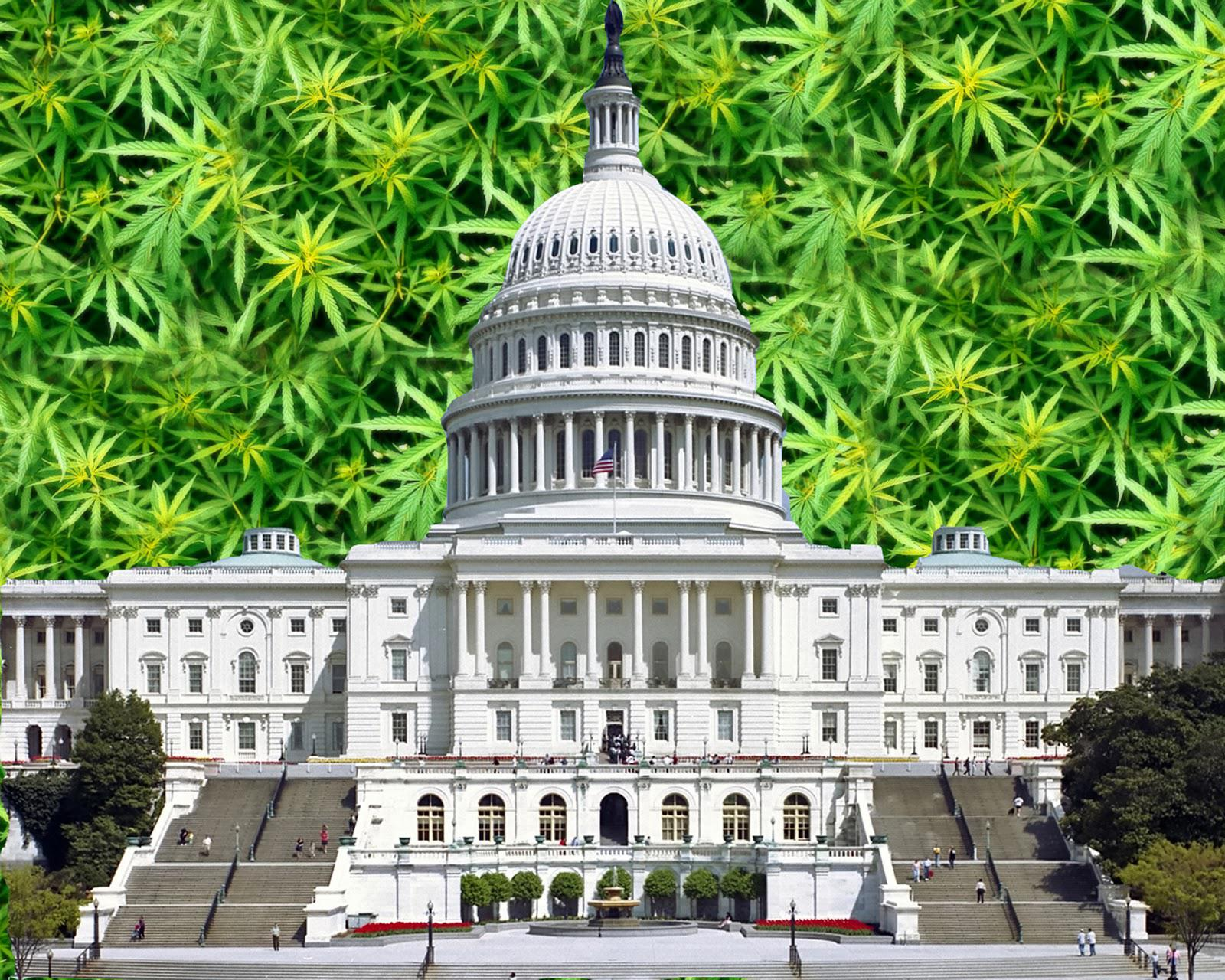 Bureaucratic Incompetents And The Marijuana Boom: Who Will Win?